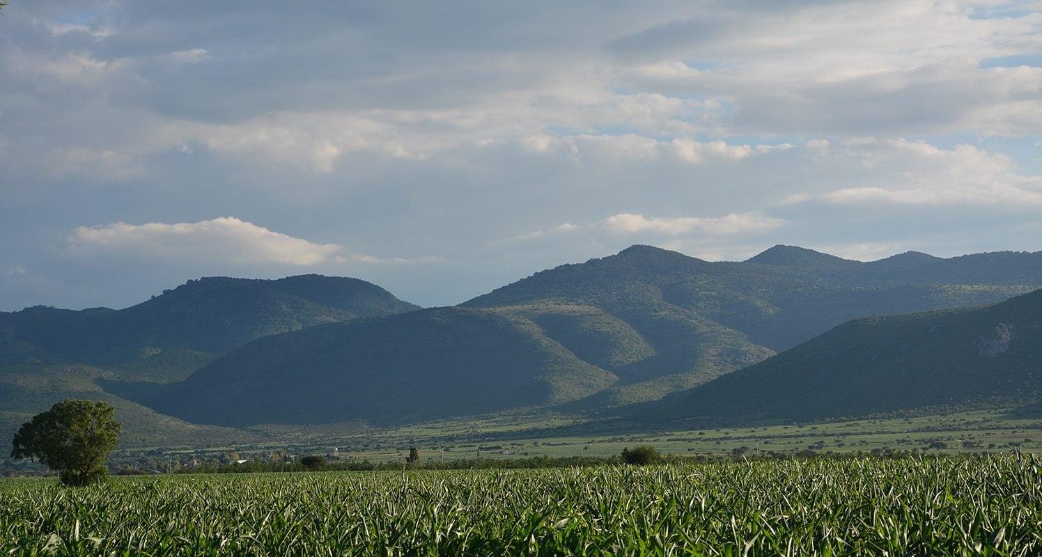 Rancho El Kiwi